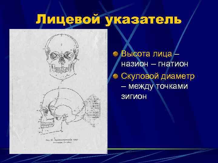 Лицевой указатель  Высота лица –   назион – гнатион   Скуловой