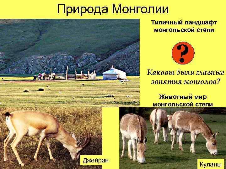 Природа Монголии   Типичный ландшафт    монгольской степи