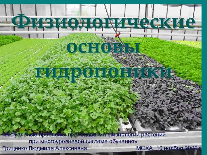 Физиологические  основы гидропоники  «Актуальные проблемы преподавания физиологии растений
