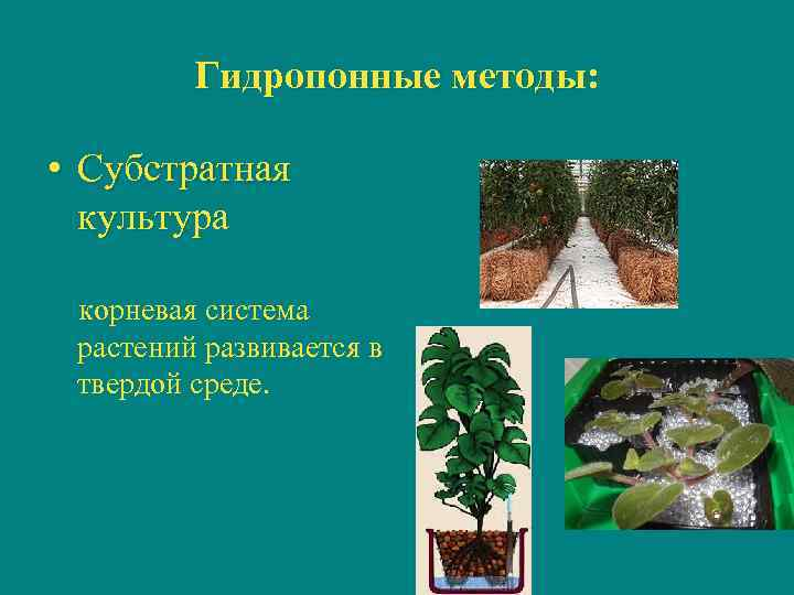 Гидропонные методы:  • Субстратная  культура  корневая система  растений