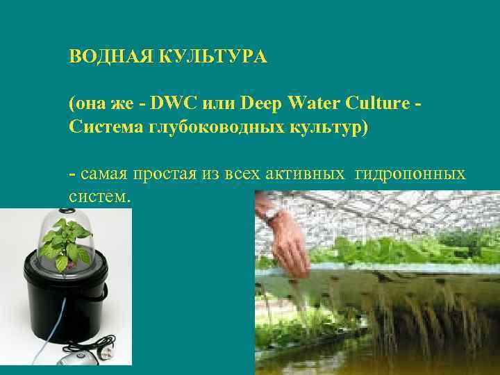 ВОДНАЯ КУЛЬТУРА (она же - DWC или Deep Water Culture - Система глубоководных культур)