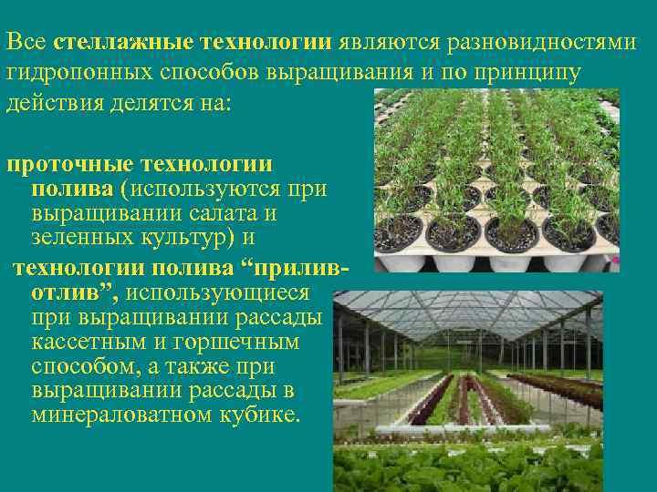 Все стеллажные технологии являются разновидностями    технологии гидропонных способов выращивания и по