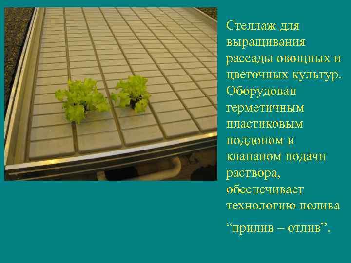 Стеллаж для выращивания рассады овощных и цветочных культур.  Оборудован герметичным пластиковым поддоном и