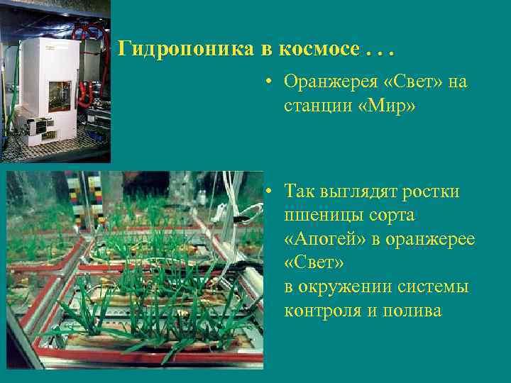 Гидропоника в космосе. . .   • Оранжерея «Свет» на   станции