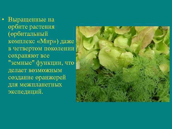 • Выращенные на  орбите растения  (орбитальный  комплекс «Мир» ) даже