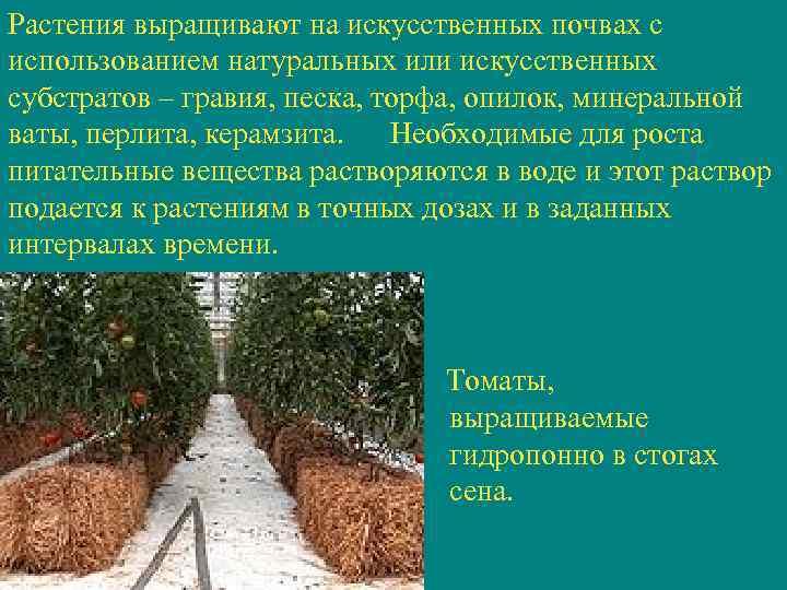 Растения выращивают на искусственных почвах с использованием натуральных или искусственных субстратов – гравия, песка,