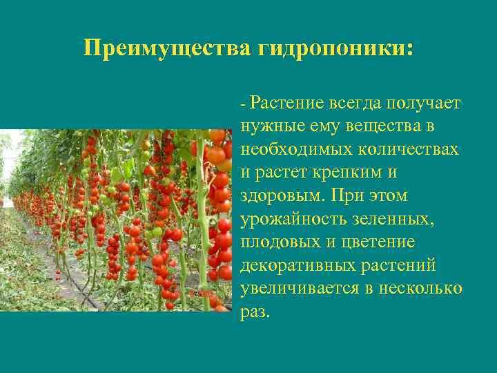 Преимущества гидропоники:    - Растение всегда получает    нужные ему