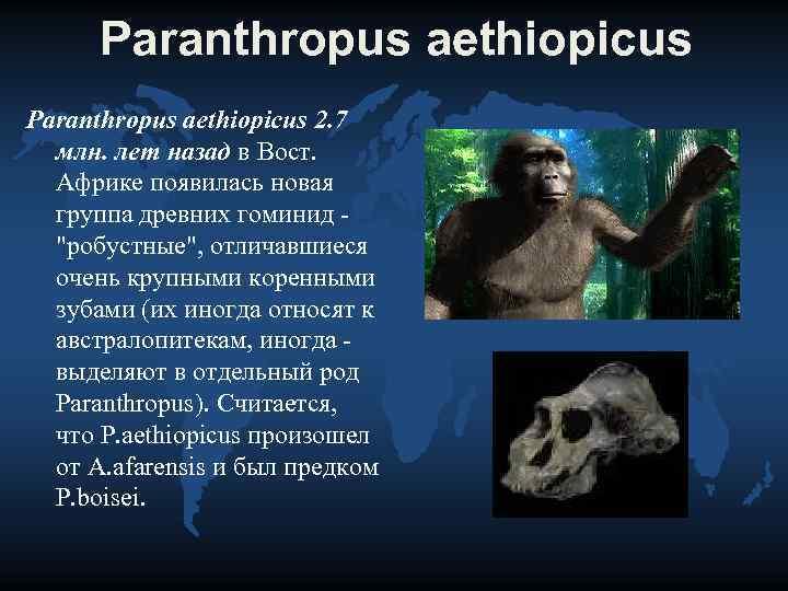 Paranthropus aethiopicus 2. 7  млн. лет назад в Вост. Африке появилась новая