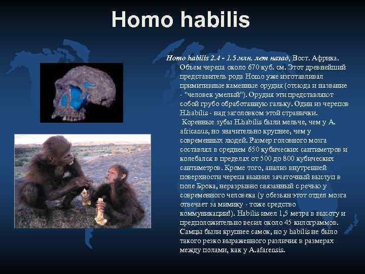 Homo habilis 2. 4 - 1. 5 млн. лет назад, Вост. Африка.