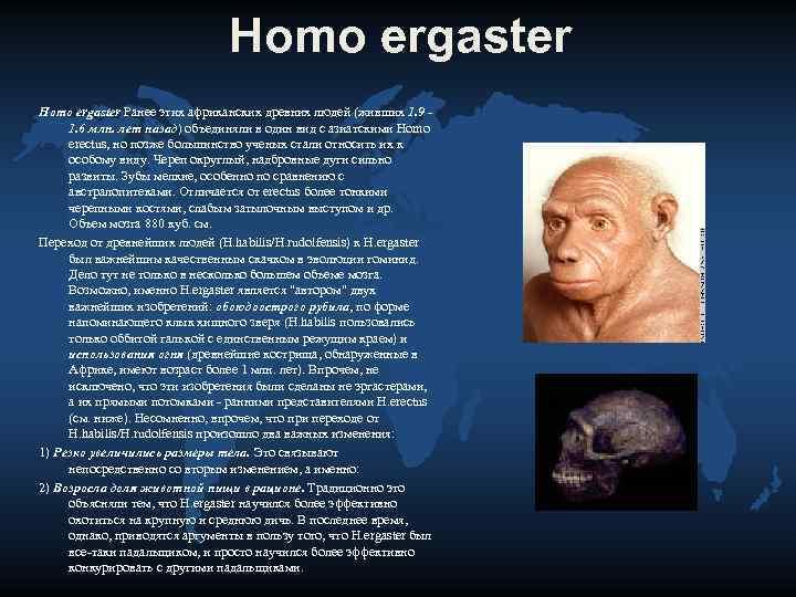 Homo ergaster Ранее этих африканских древних людей (живших