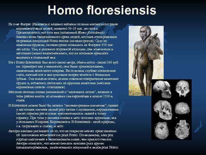 Homo floresiensis На о-ве Флорес (Индонезия) недавно найдены останки
