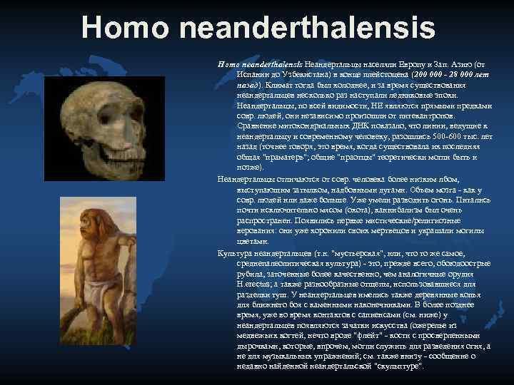 Homo neanderthalensis   Homo neanderthalensis Неандертальцы населяли Европу и Зап. Азию (от