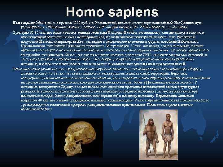Homo sapiens Объем мозга в среднем 1300 куб. см.