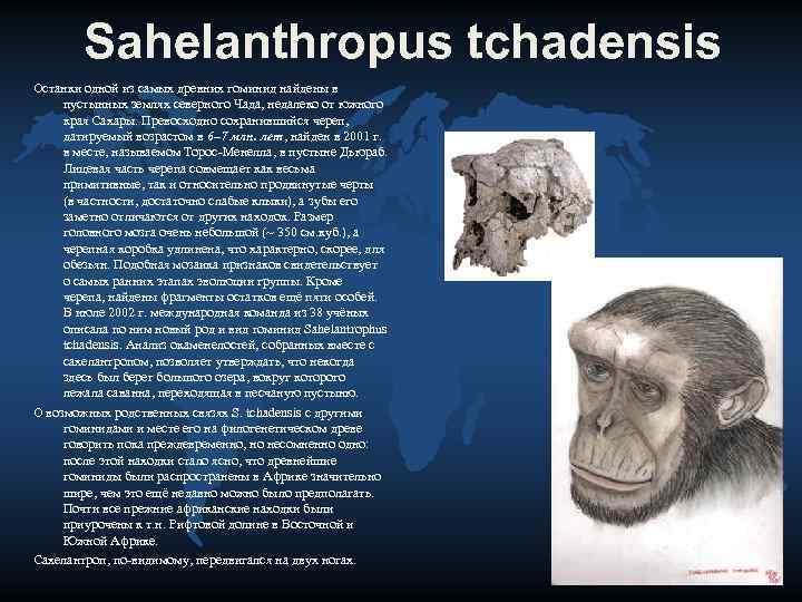 Sahelanthropus tchadensis Останки одной из самых древних гоминид найдены в  пустынных