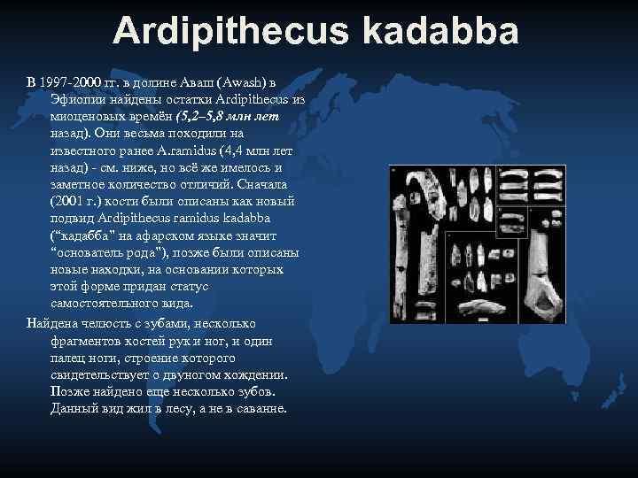 Ardipithecus kadabba В 1997 -2000 гг. в долине Аваш (Awash) в
