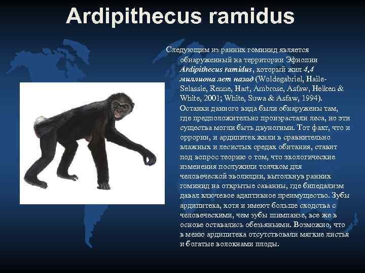 Ardipithecus ramidus   Следующим из ранних гоминид является   обнаруженный на территории
