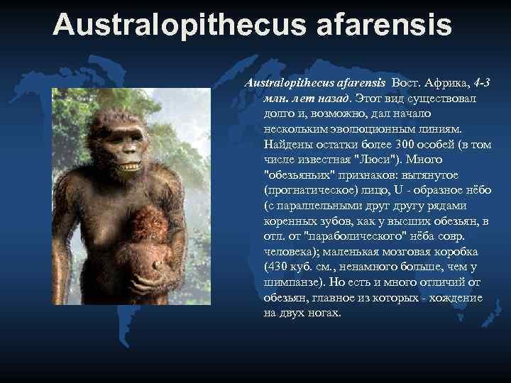 Australopithecus afarensis   Australopithecus afarensis Вост. Африка, 4 -3   млн. лет