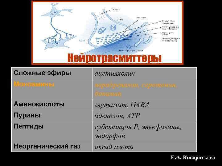 Нейротрасмиттеры Сложные эфиры  ацетилхолин Моноамины  норадреналин, серотонин,