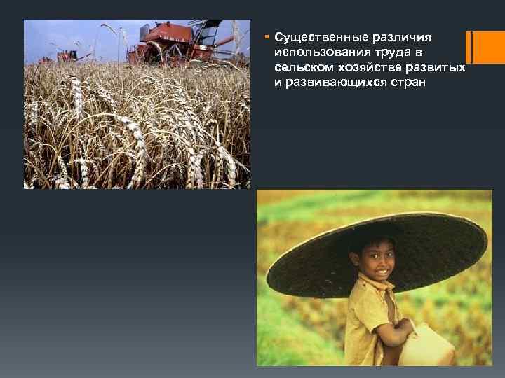 § Существенные различия  использования труда в  сельском хозяйстве развитых  и развивающихся