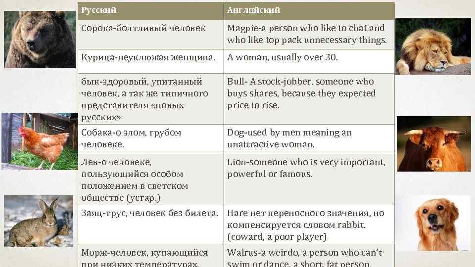 Русский    Английский Сорока-болтливый человек  Magpie-a person who like to chat