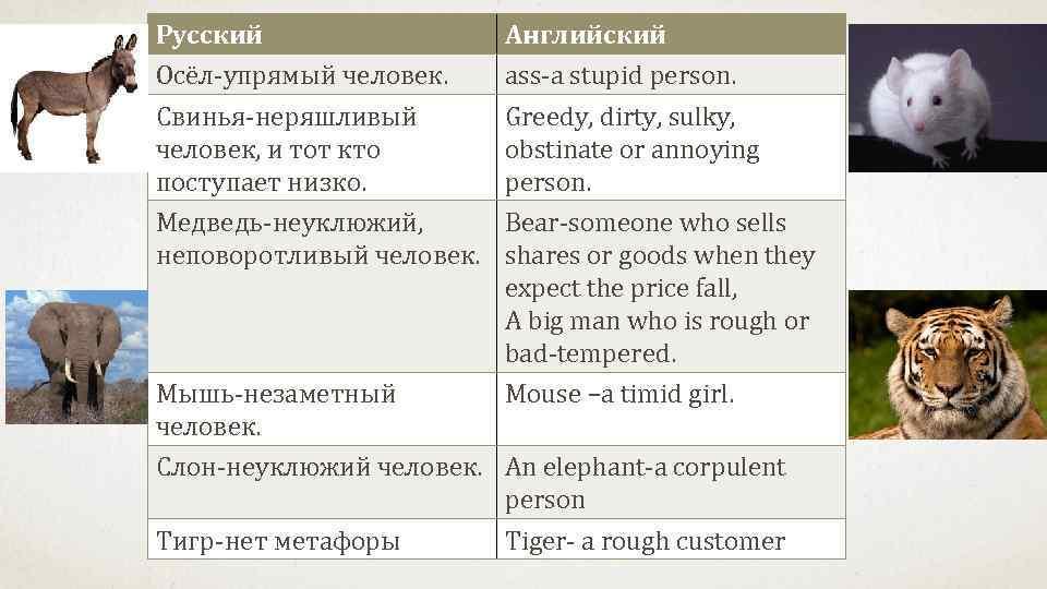 Русский    Английский Осёл-упрямый человек. ass-a stupid person. Свинья-неряшливый   Greedy,