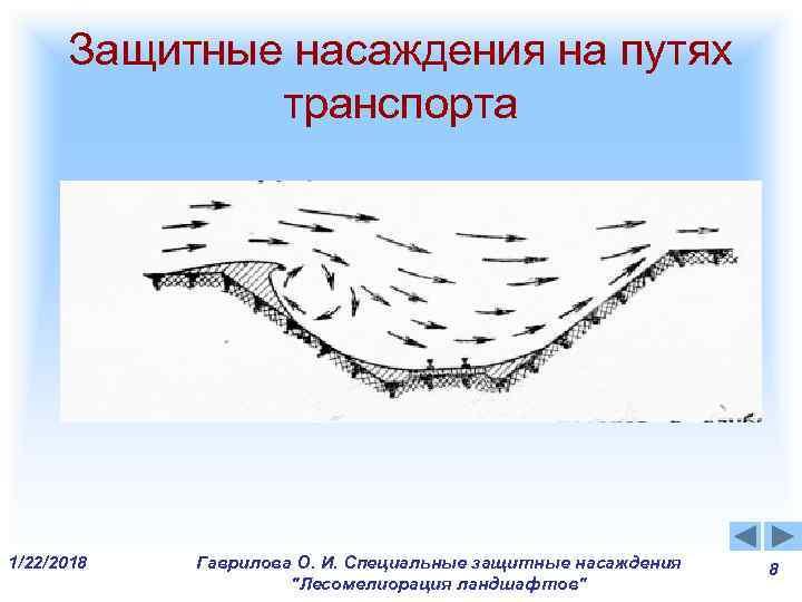 Защитные насаждения на путях    транспорта 1/22/2018  Гаврилова О. И.