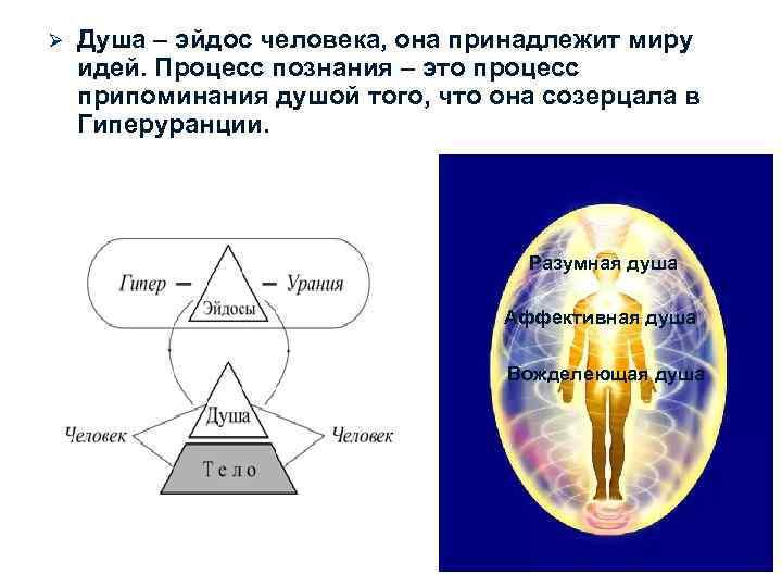 Ø  Душа – эйдос человека, она принадлежит миру идей. Процесс познания – это