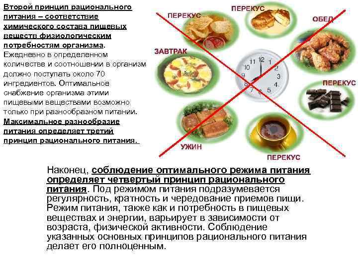 Второй принцип рационального питания – соответствие химического состава пищевых веществ физиологическим потребностям организма.