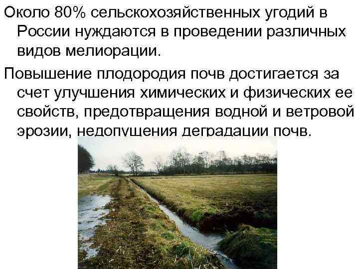 Около 80% сельскохозяйственных угодий в России нуждаются в проведении различных видов мелиорации. Повышение плодородия