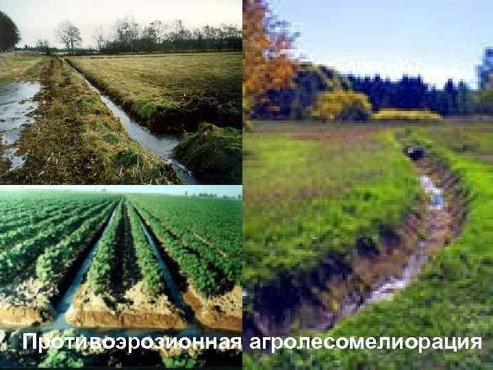 Противоэрозионная агролесомелиорация