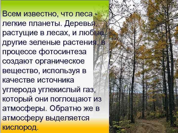 Всем известно, что леса - легкие планеты. Деревья, растущие в лесах, и любые другие