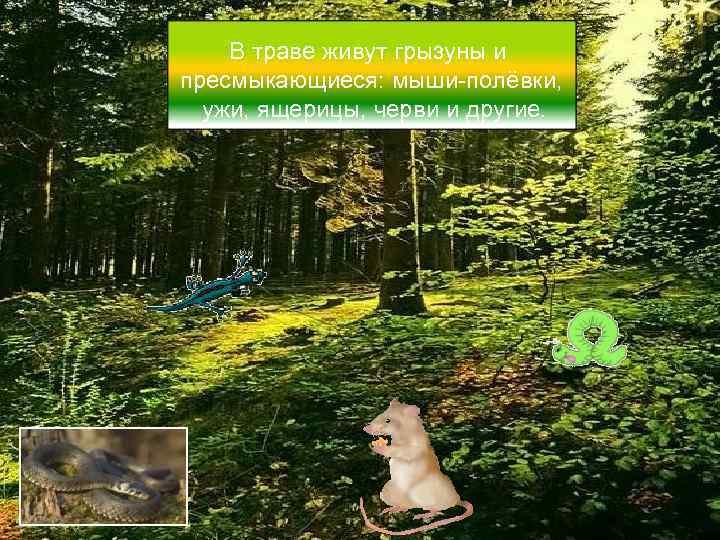 В траве живут грызуны и пресмыкающиеся: мыши-полёвки,  ужи, ящерицы, черви и