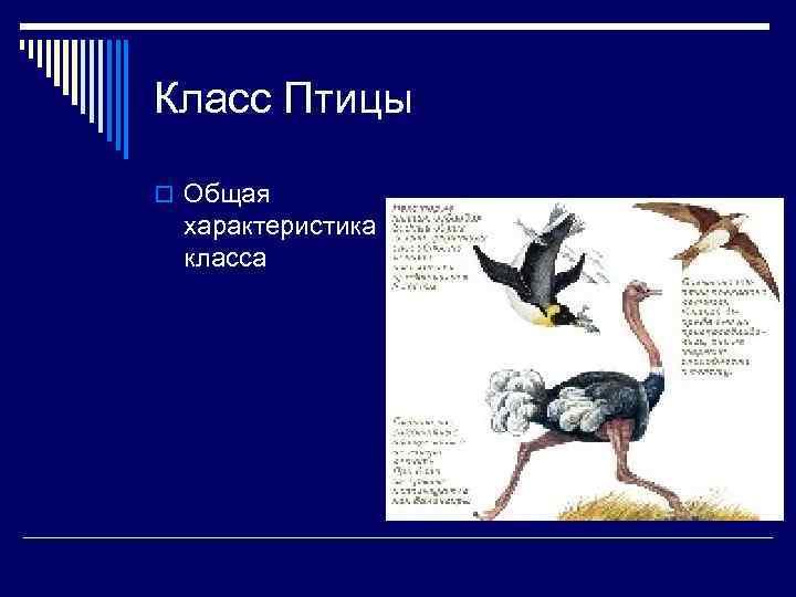 Класс Птицы o Общая характеристика класса