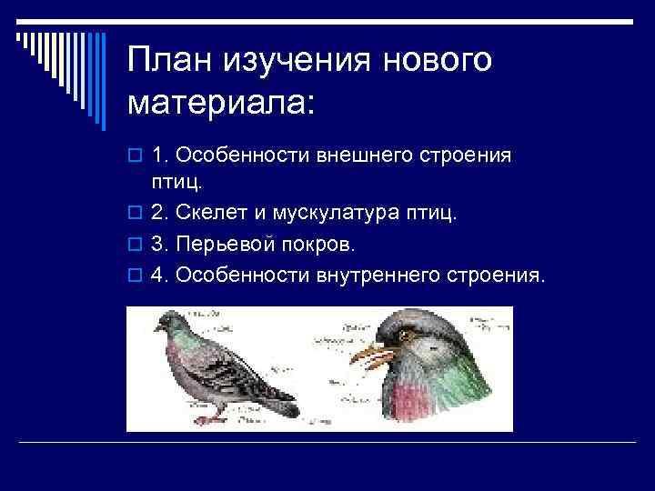 План изучения нового материала: o 1. Особенности внешнего строения  птиц. o 2. Скелет