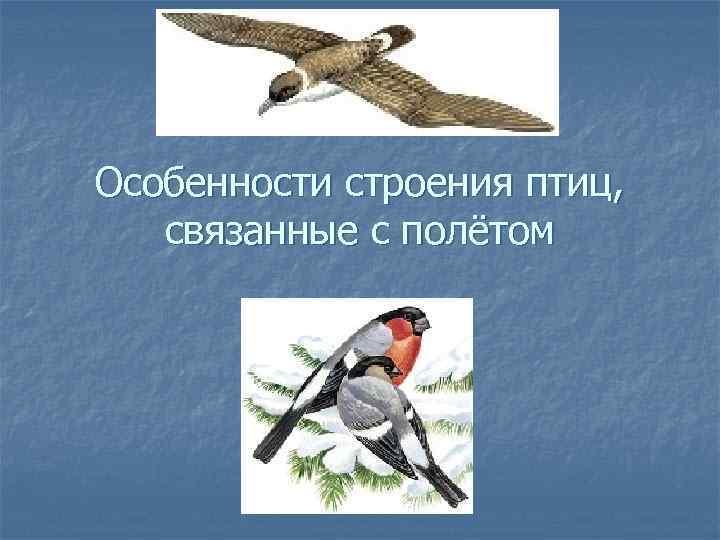 Особенности строения птиц, связанные с полётом