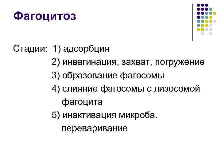 Фагоцитоз Стадии: 1) адсорбция   2) инвагинация, захват, погружение   3) образование