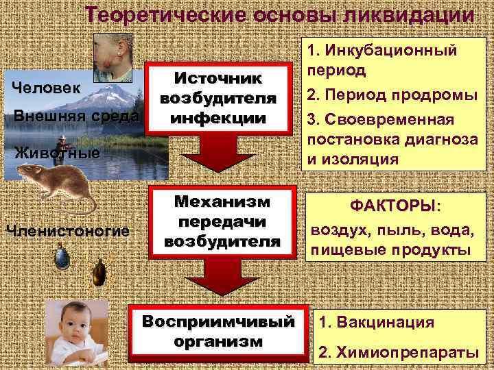 Теоретические основы ликвидации       1. Инкубационный