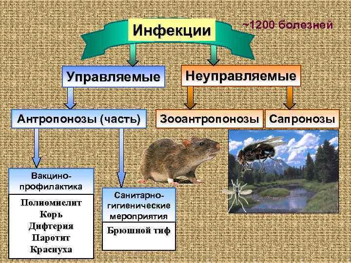 ~1200 болезней     Инфекции