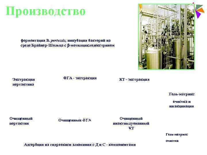 Производство     Paediatric Vaccines   ферментация В. pertussis, инкубация бактерий