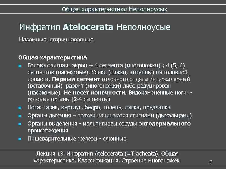 Общая характеристика Неполноусых  Инфратип Atelocerata Неполноусые   Atelocerata
