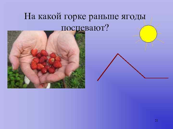 На какой горке раньше ягоды   поспевают?