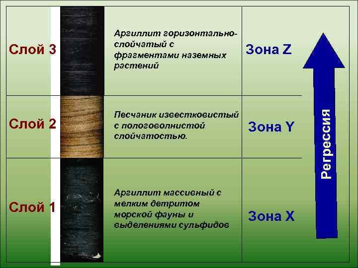 Аргиллит горизонтально-   слойчатый с Слой 3  фрагментами наземных