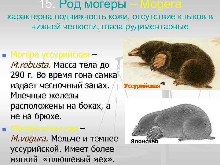 15. Род могеры – Mogera характерна подвижность кожи, отсутствие клыков в