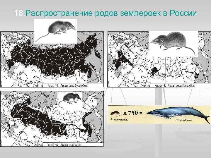 18. Распространение родов землероек в России