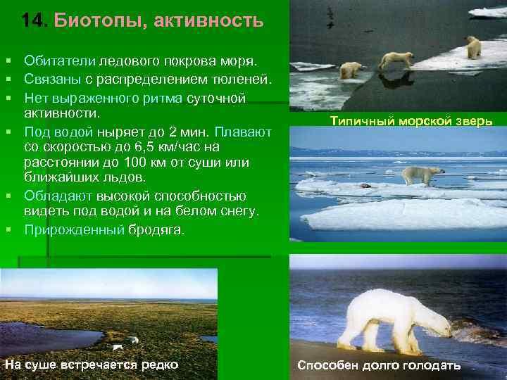 14. Биотопы, активность § Обитатели ледового покрова моря. § Связаны с распределением