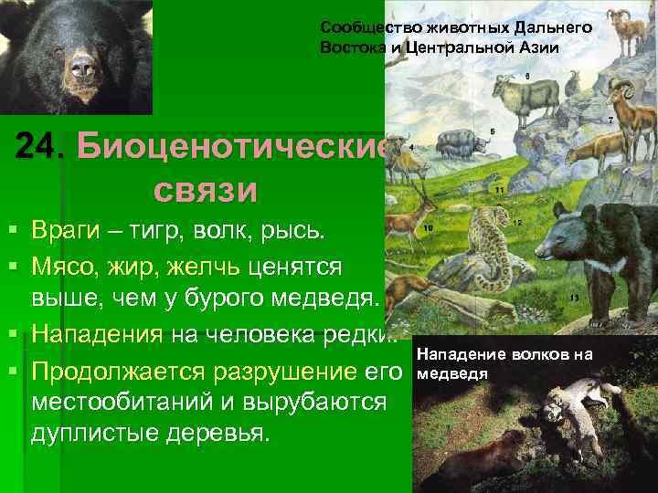 Сообщество животных Дальнего    Востока и Центральной Азии