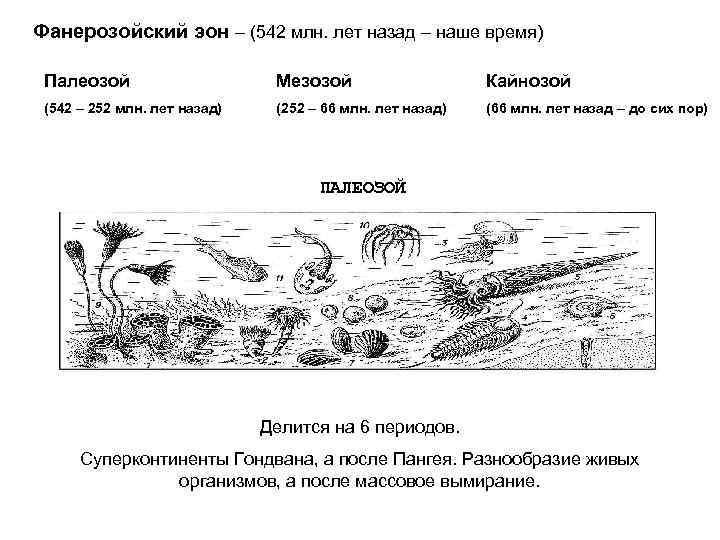 Фанерозойский эон – (542 млн. лет назад – наше время)  Палеозой