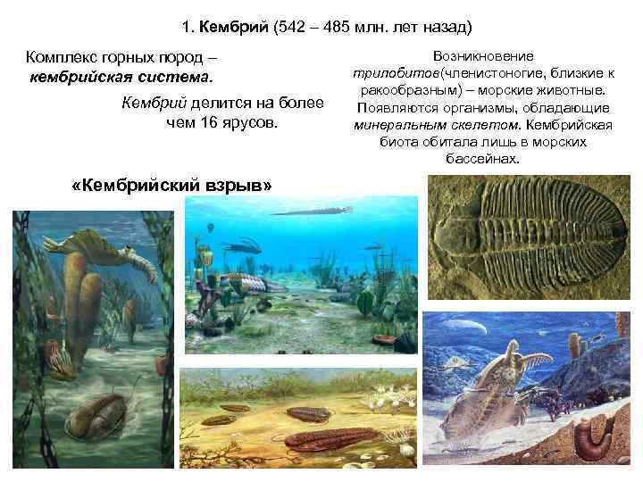 1. Кембрий (542 – 485 млн. лет назад) Комплекс горных