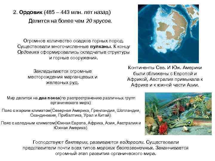 2. Ордовик (485 – 443 млн. лет назад)   Делится на более