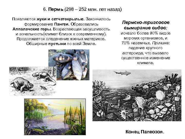 6. Пермь (298 – 252 млн. лет назад) Появляются жуки и